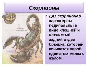 Скорпионы Для скорпионов характерны педипальпы в виде клешней и членистый зад