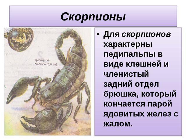 Скорпионы Для скорпионов характерны педипальпы в виде клешней и членистый зад...