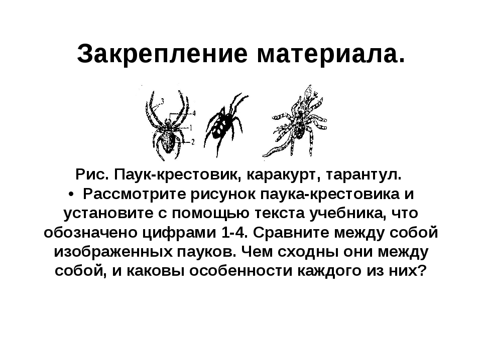 Закрепление материала. Рис. Паук-крестовик, каракурт, тарантул. • Рассмотрите...