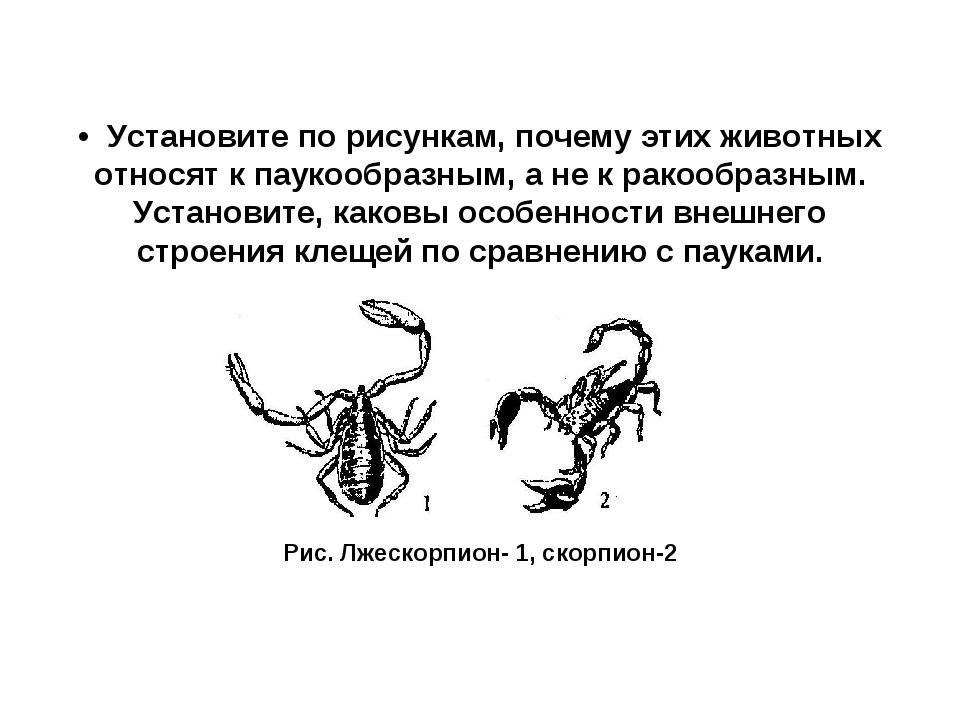 • Установите по рисункам, почему этих животных относят к паукообразным, а не...