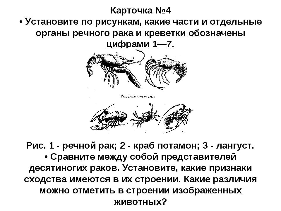 Карточка №4 • Установите по рисункам, какие части и отдельные органы речного...