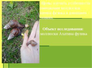 Цель: изучить особенности размножения моллюсков Ахатина фулика в домашних ус