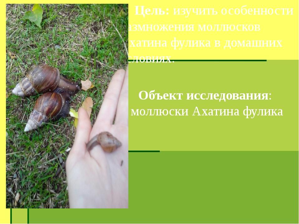 Цель: изучить особенности размножения моллюсков Ахатина фулика в домашних ус...