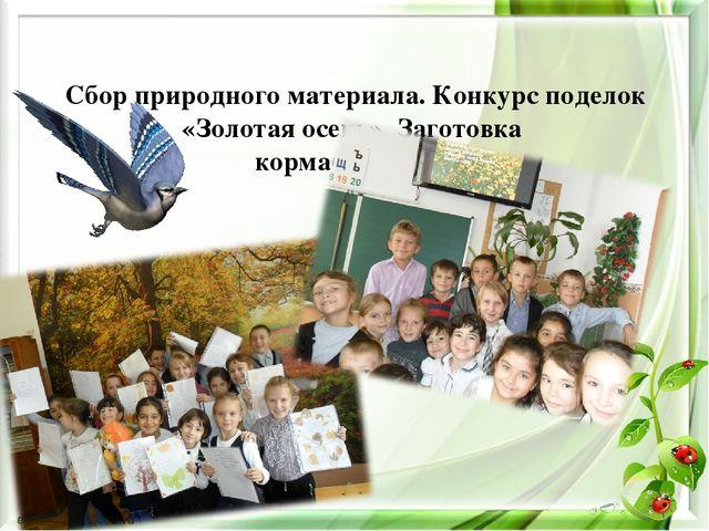 Сбор природного материала. Конкурс поделок «Золотая осень». Заготовка корма...
