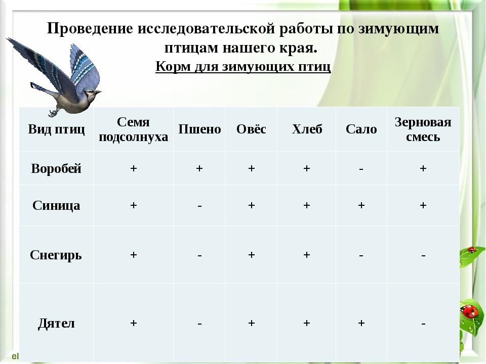 Проведение исследовательской работы по зимующим птицам нашего края. Корм для...