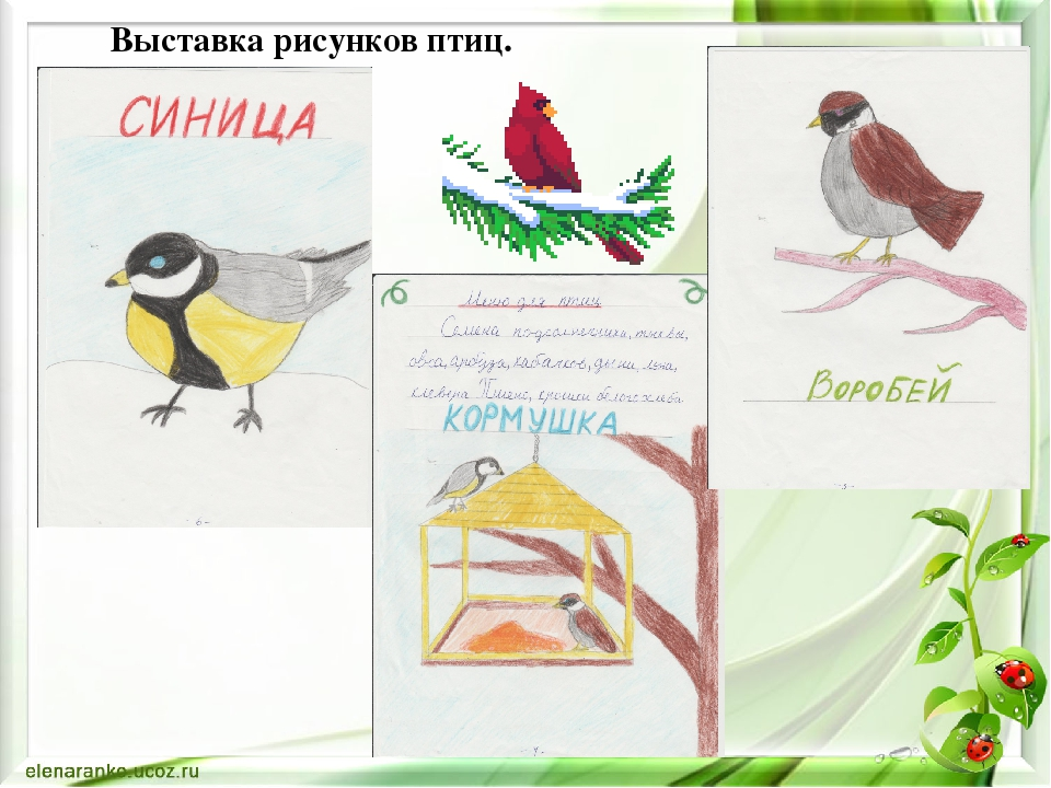 Выставка рисунков птиц.