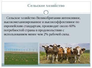 Сельское хозяйство Сельское хозяйствоВеликобритании интенсивное, высокомехан