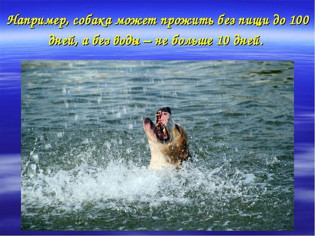 Например, собака может прожить без пищи до 100 дней, а без воды – не больше 1...