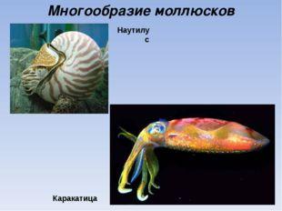 Многообразие моллюсков Каракатица Наутилус