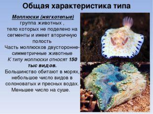 Общая характеристика типа Моллюски (мягкотелые) группа животных , тело которы