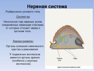 Нервная система Разбросанно-узлового типа. Состоит из: Нескольких пар нервных