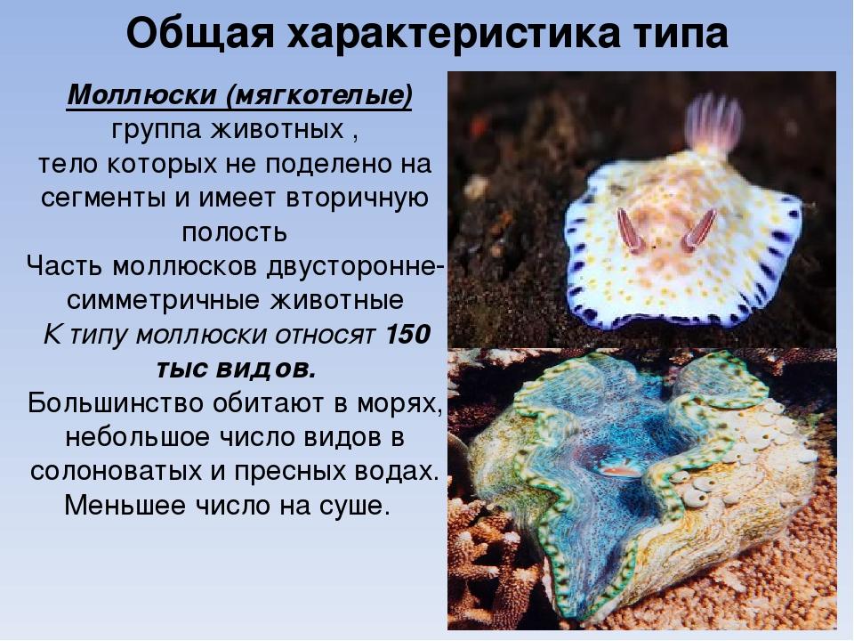 Общая характеристика типа Моллюски (мягкотелые) группа животных , тело которы...