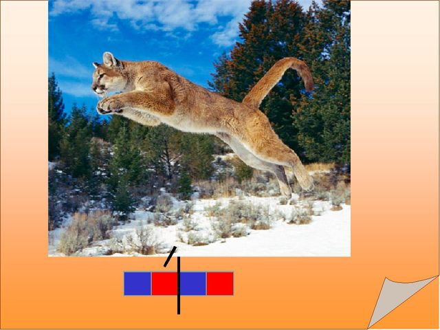 Всех кугуаров другими словами Люди зовут ещё горными львами, Хоть не рычит, н...