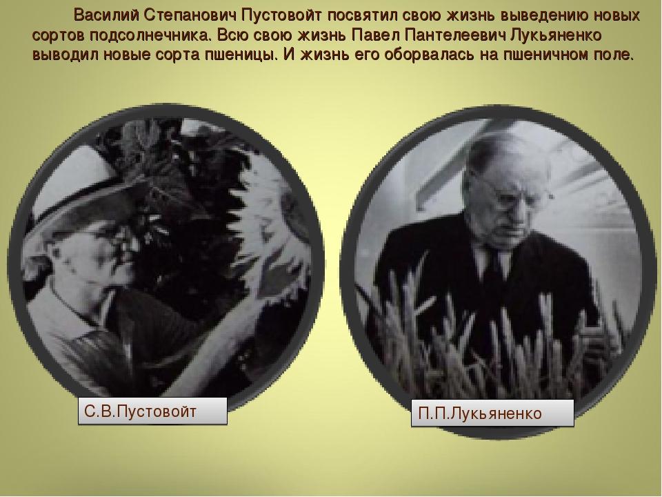 Василий Степанович Пустовойт посвятил свою жизнь выведению новых сортов под...