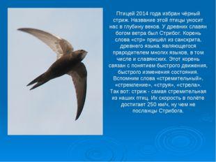 Птицей 2014 года избран чёрный стриж. Название этой птицы уносит нас в глубин