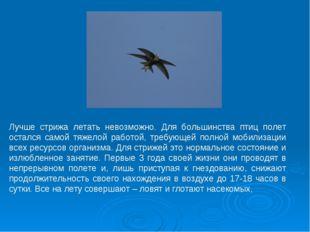 Лучше стрижа летать невозможно. Для большинства птиц полет остался самой тяже