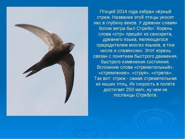 Птицей 2014 года избран чёрный стриж. Название этой птицы уносит нас в глубин...