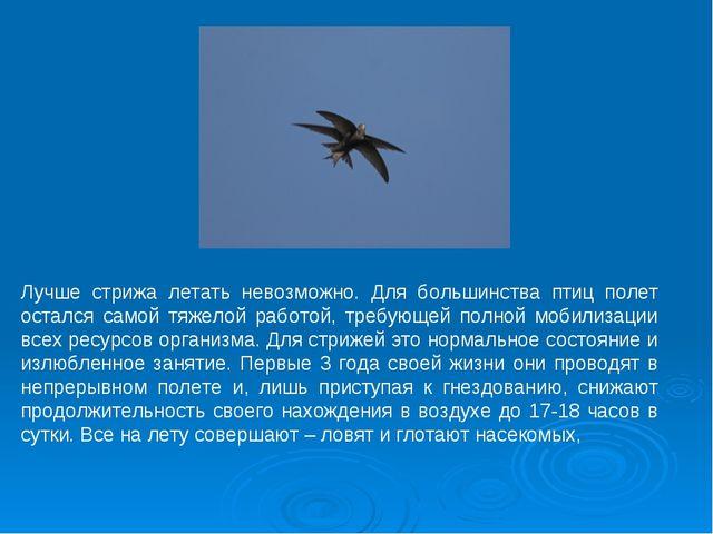 Лучше стрижа летать невозможно. Для большинства птиц полет остался самой тяже...