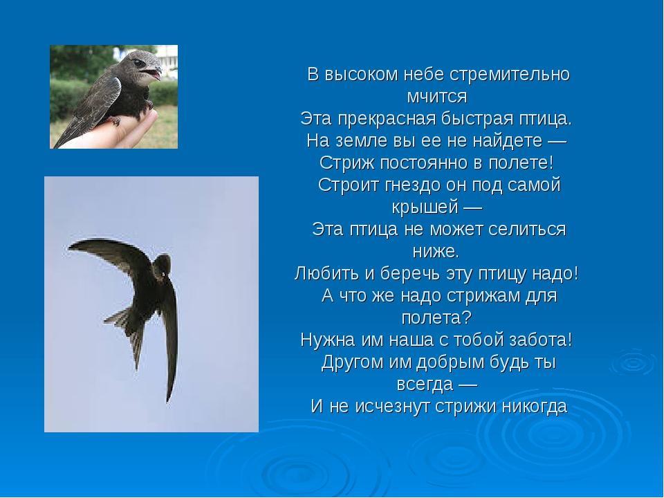 В высоком небе стремительно мчится Эта прекрасная быстрая птица. На земле вы...