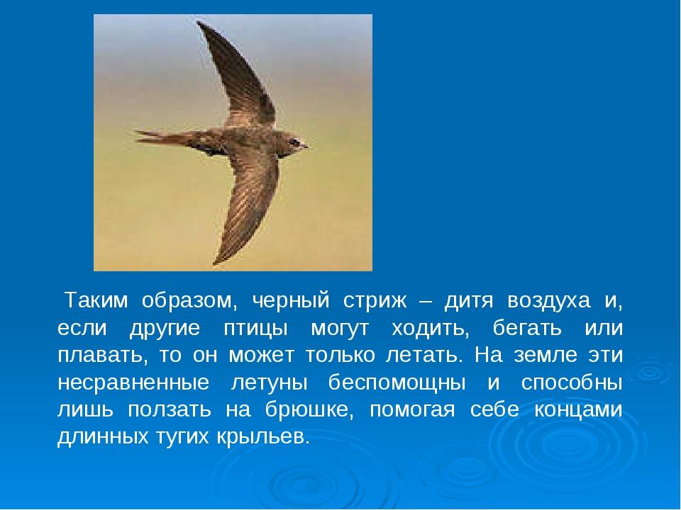 Таким образом, черный стриж – дитя воздуха и, если другие птицы могут ходить...