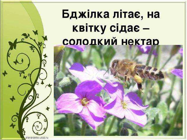 Бджілка літає, на квітку сідає – солодкий нектар збирає.