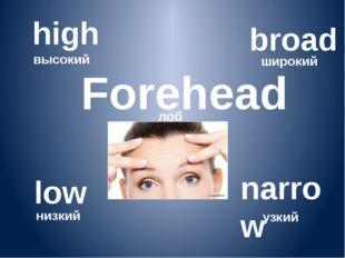 Forehead лоб high высокий low низкий broad широкий narrow узкий