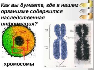 Как вы думаете, где в нашем организме содержится наследственная информация? х