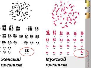 Женский организм Мужской организм