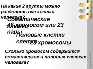 Соматические клетки Половые клетки клетки 46 хромосом или 23 пары 23 хромосом