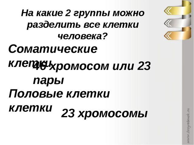 Соматические клетки Половые клетки клетки 46 хромосом или 23 пары 23 хромосом...