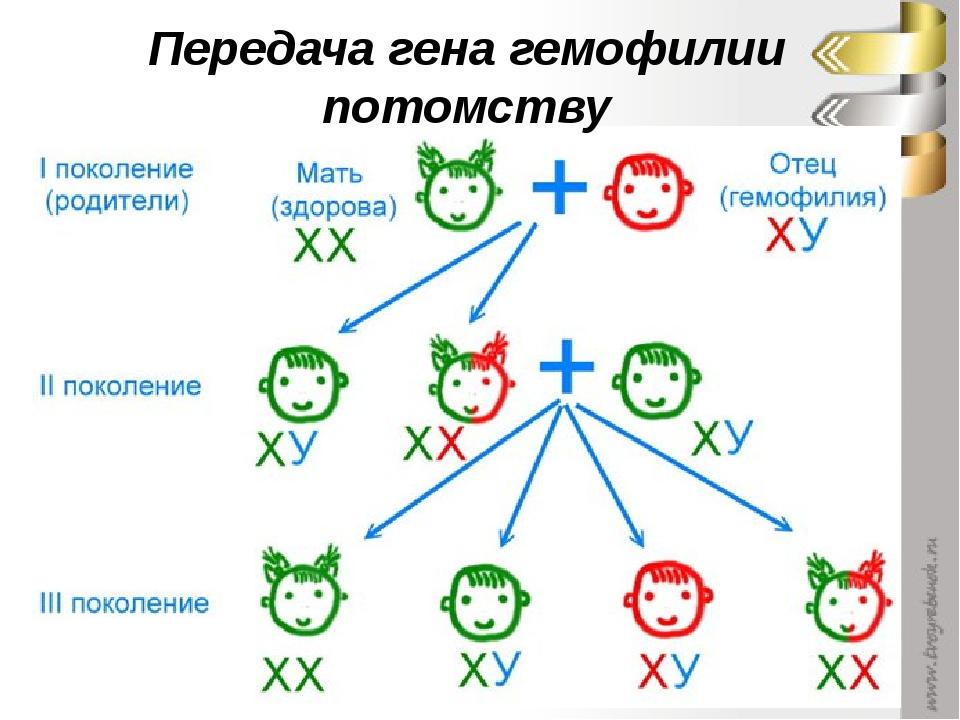 Передача гена гемофилии потомству