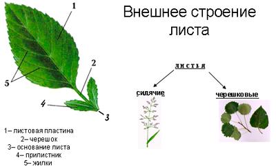 hello_html_m2ec6a290.jpg