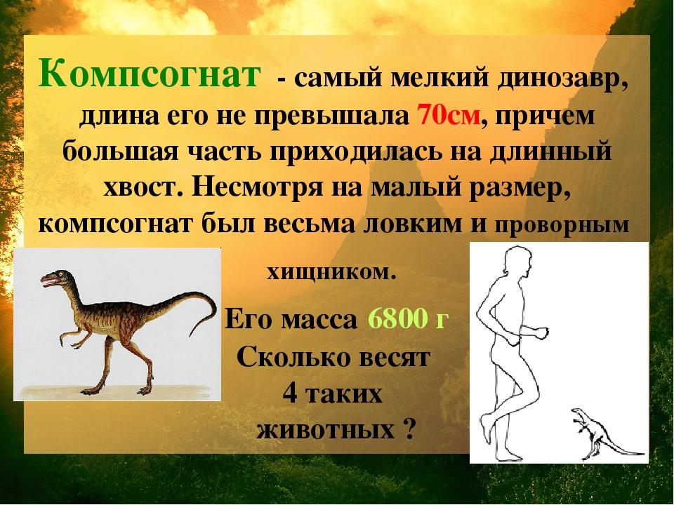 Компсогнат - самый мелкий динозавр, длина его не превышала 70см, причем больш...