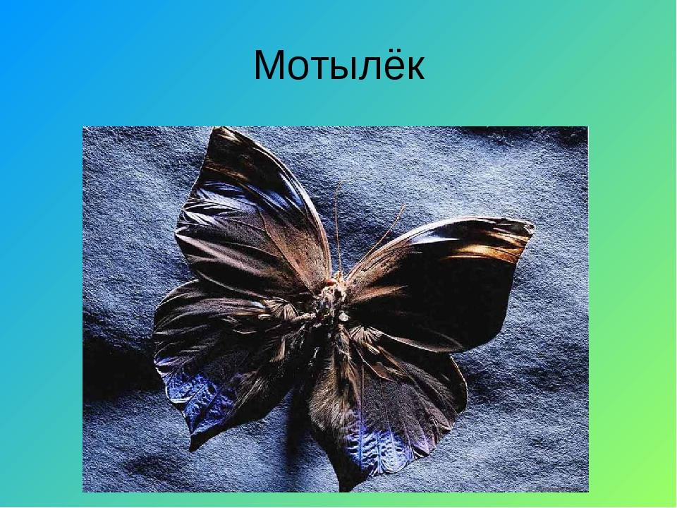 Мотылёк
