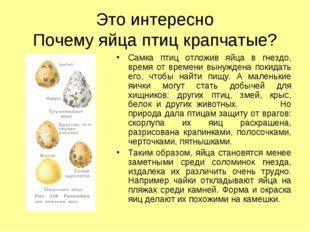 Это интересно Почему яйца птиц крапчатые? Самка птиц отложив яйца в гнездо, в