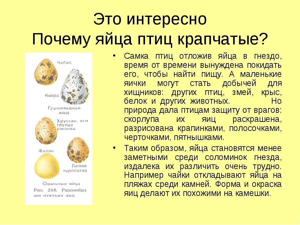 Это интересно Почему яйца птиц крапчатые? Самка птиц отложив яйца в гнездо, в...
