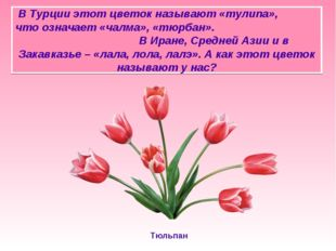 В Турции этот цветок называют «тулипа», что означает «чалма», «тюрбан». В Ир
