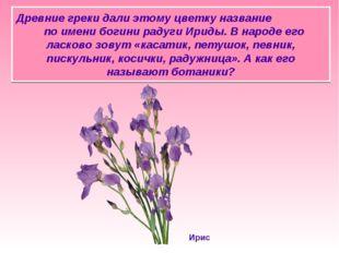 Древние греки дали этому цветку название по имени богини радуги Ириды. В наро