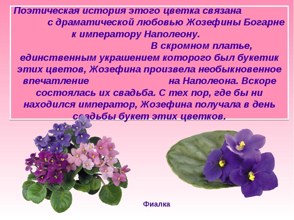 Поэтическая история этого цветка связана с драматической любовью Жозефины Бог...