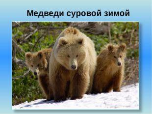Медведи суровой зимой