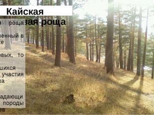 Кайская реликтовая роща Кайская роща — единственный в Иркутске массив реликто