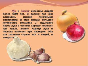 Лук и чеснок известны людям более 6000 лет. С давних пор они славились своим