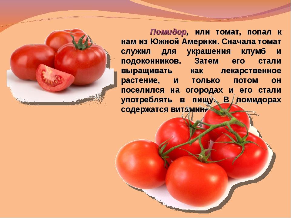 Помидор, или томат, попал к нам из Южной Америки. Сначала томат служил для у...
