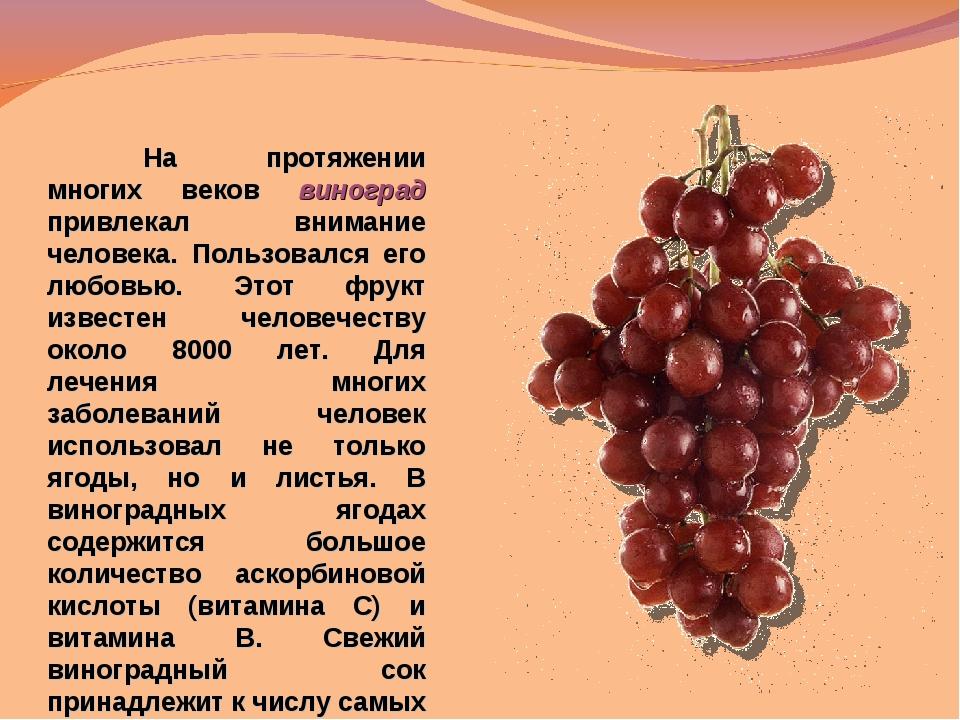 На протяжении многих веков виноград привлекал внимание человека. Пользовался...