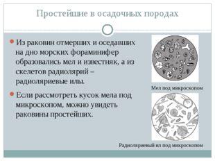 Простейшие в осадочных породах Из раковин отмерших и оседавших на дно морских