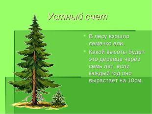Устный счет В лесу взошло семечко ели. Какой высоты будет это деревце через с