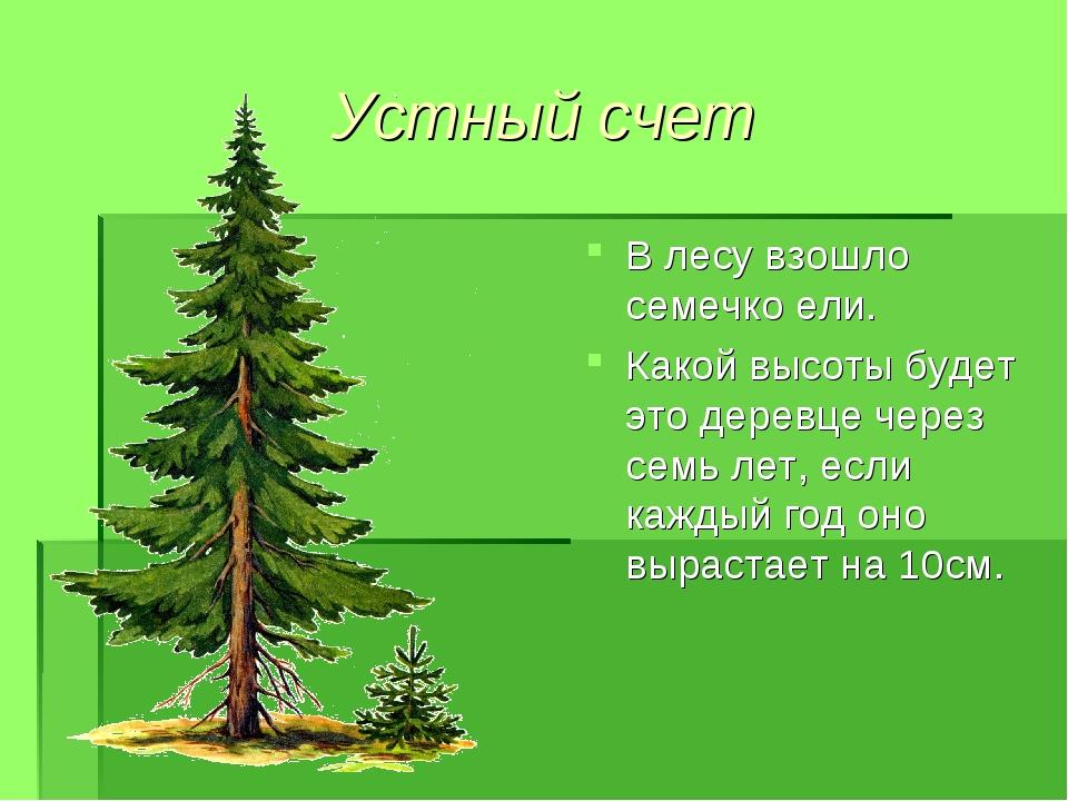 Устный счет В лесу взошло семечко ели. Какой высоты будет это деревце через с...