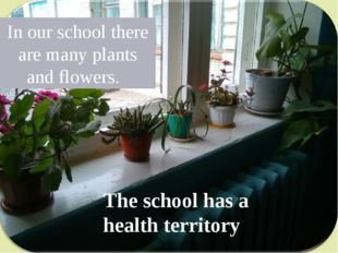 In our school there are many plants and flowers. The school has a health terr