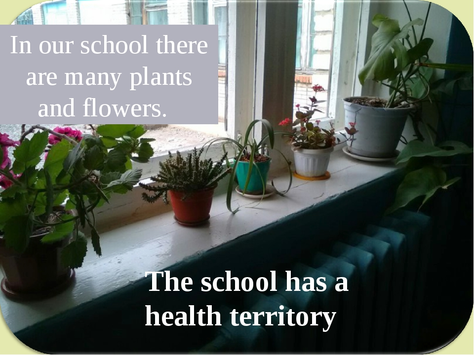 In our school there are many plants and flowers. The school has a health terr...