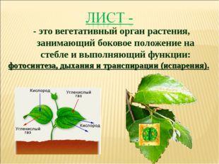 - это вегетативный орган растения, занимающий боковое положение на стебле и в